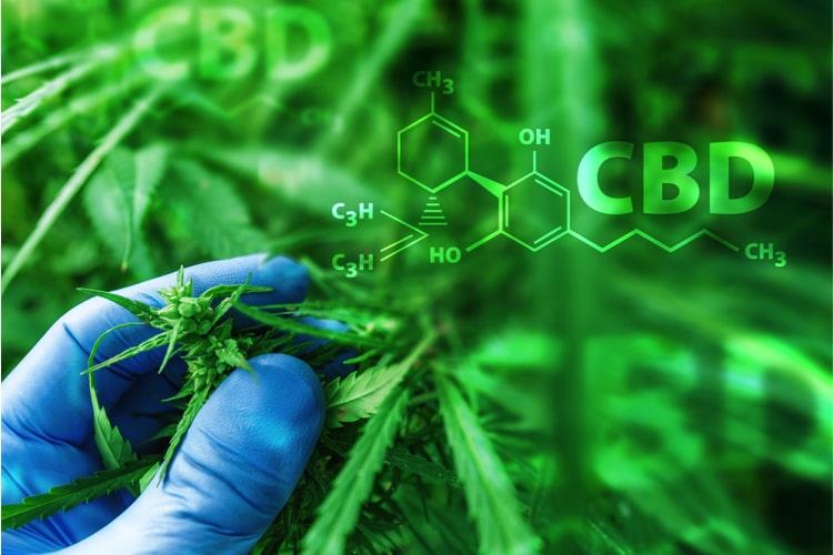 Herstellung von CBD Öl