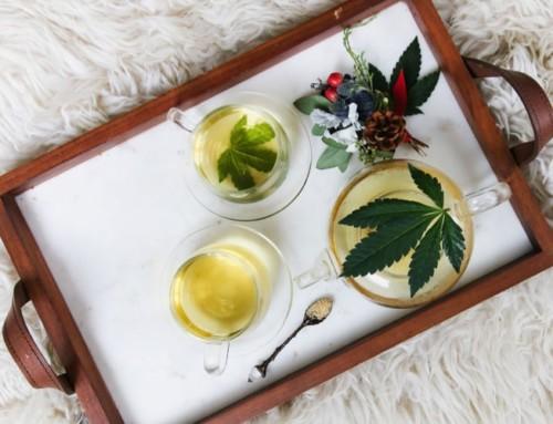 CBD Tee – was kann dir Hanftee bieten?