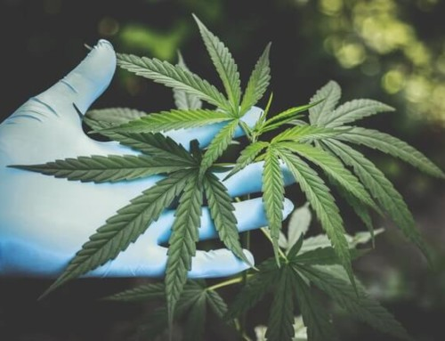 Cannabisöl und CBD Öl – kennst du den Unterschied?