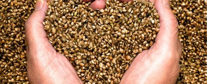 Informationen zu CBD Samen