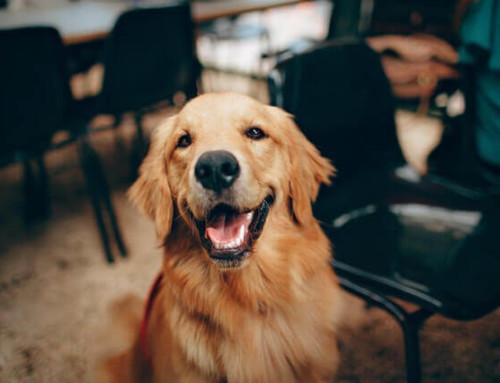 CBD Öl für deinen Hund bei Allergie