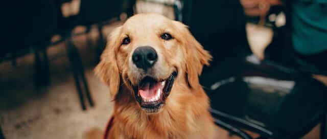 Allergien treten auch bei Hunden auf