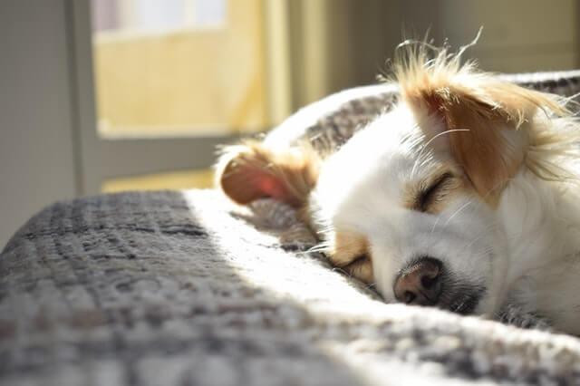 Allergische Reaktionen bei Hunden