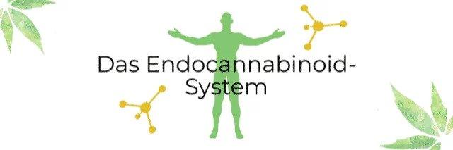 CBD Wirkung auf den Körper - Cannabinoide, Endocannabinoid-System