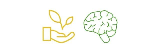 Hanföl für ein gesundes Gehirn