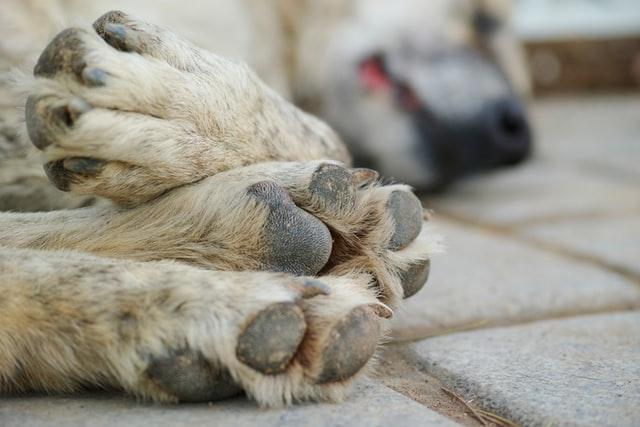 Schmerzmittel - welche sind für Hunde geeignet?