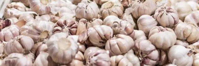 Knoblauch - natürliches Mittel gegen Zahnschmerzen