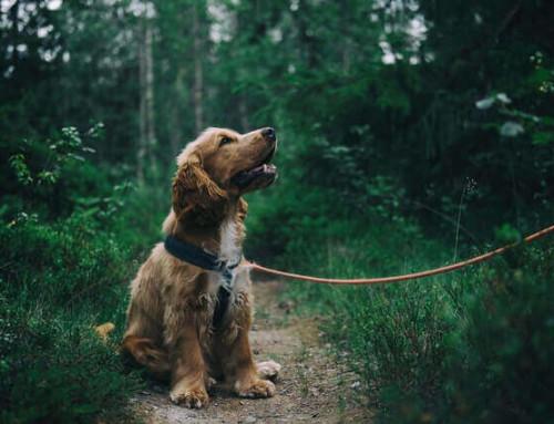 Der Mammatumor beim Hund – Schmerzen und Lebensqualität