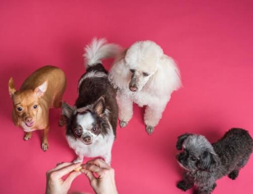 Beruhigungsmittel für Hunde im Test – Beruhigungstipps für deinen Hund