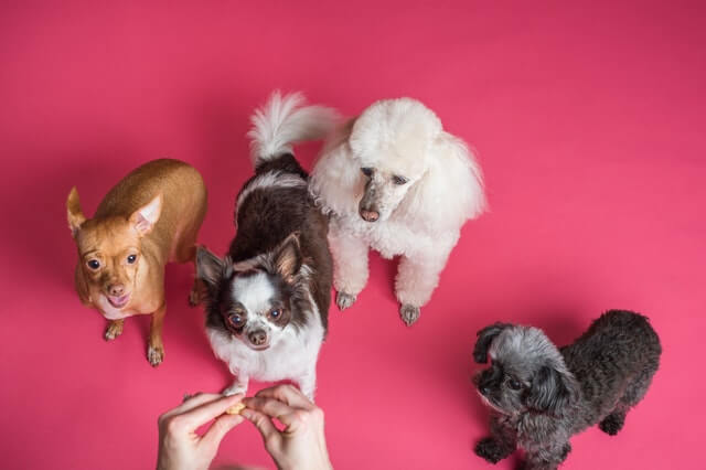 Beruhigungsmittel für Hunde im Check
