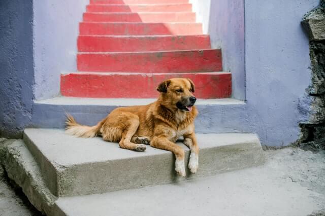 Natürliche Futterergänzung mit Hundehanf