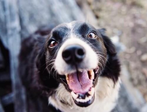 Hanföl für deinen Hund – Was solltest du wissen?
