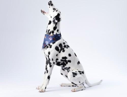 Hundehanf – Was solltest du zum Thema wissen?