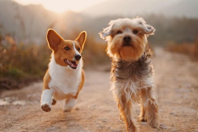Hundewissen für die Hundemama
