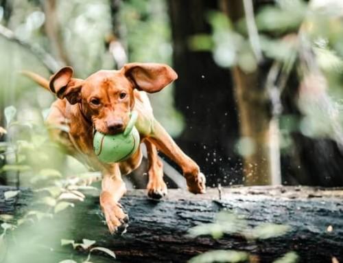 Einen überdrehten Hund beruhigen – welche Möglichkeiten gibt es?