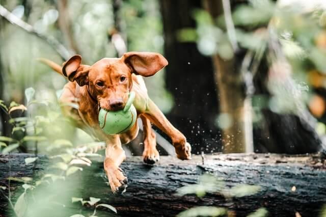 Ist dein Hund überdreht?