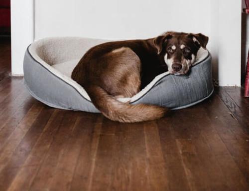 CBD Öl für den Hund kaufen – was solltest du beachten?