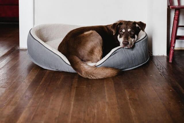 CBD Öl für Hunde kaufen
