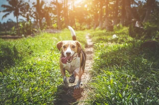 CBD gegen Angst bei Einzelhund