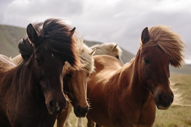 Welche Nebenwirkungen hat CBD Öl für Tiere?