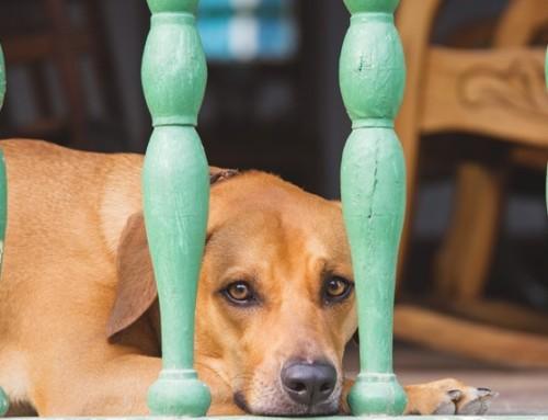 Hanf für Hunde – viele Anwendungsmöglichkeiten für deinen Vierbeiner