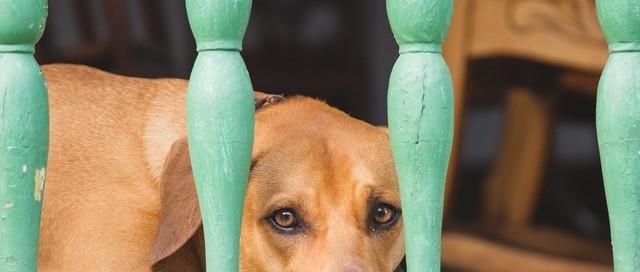 CBD Öl für Hunde